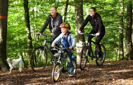Bokskogen med cyklel